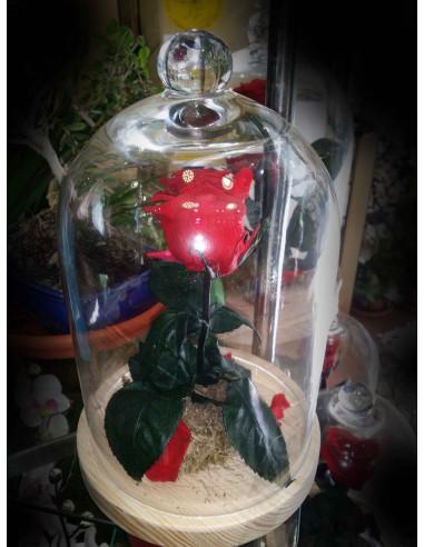 Rosa eterna en cupula de cristal
