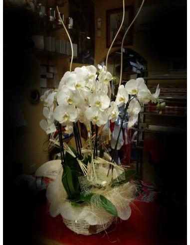 Cesta de Plantas de 3 orquideas