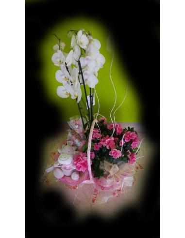 Cesta de plantas con orquideas y peluche
