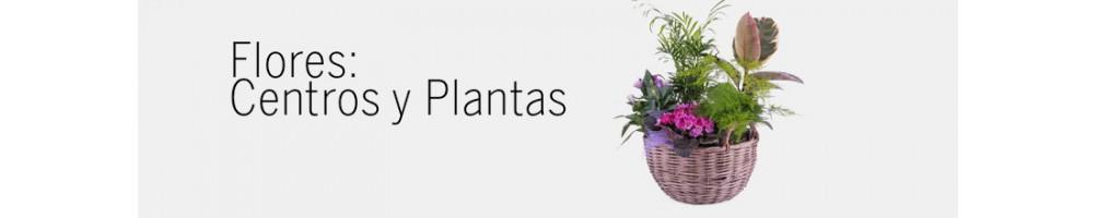 Flores: Centros y Plantas